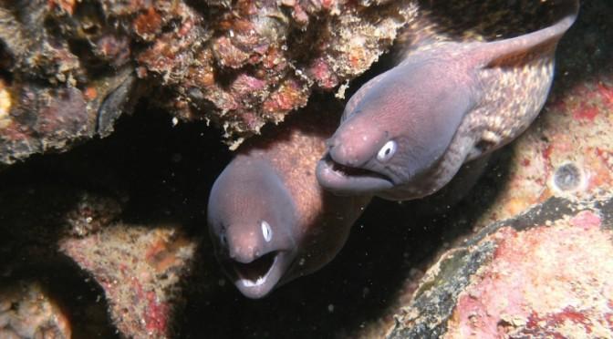 Andaman Zee, Duiken met Giganten