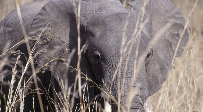 South Luangwa: op zoek naar de Big Five