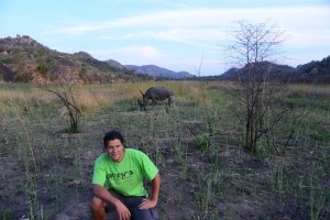 Neushoorns in Matobo NP Zimbabwe.
