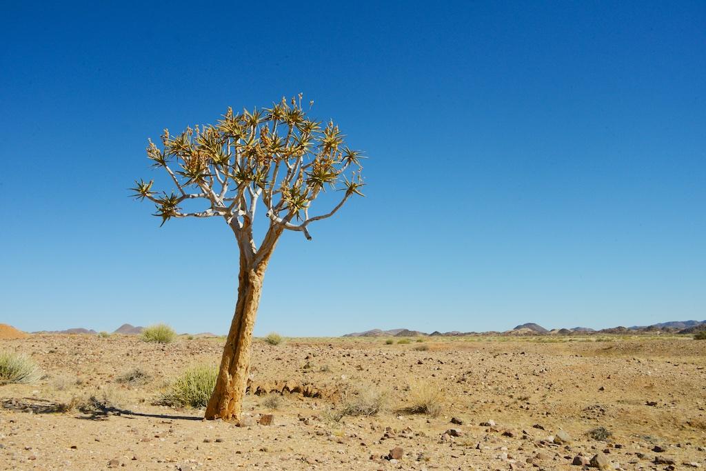 De boom...