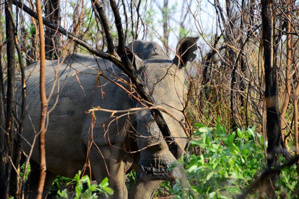 Nationaal park Matobo Zimbabwe