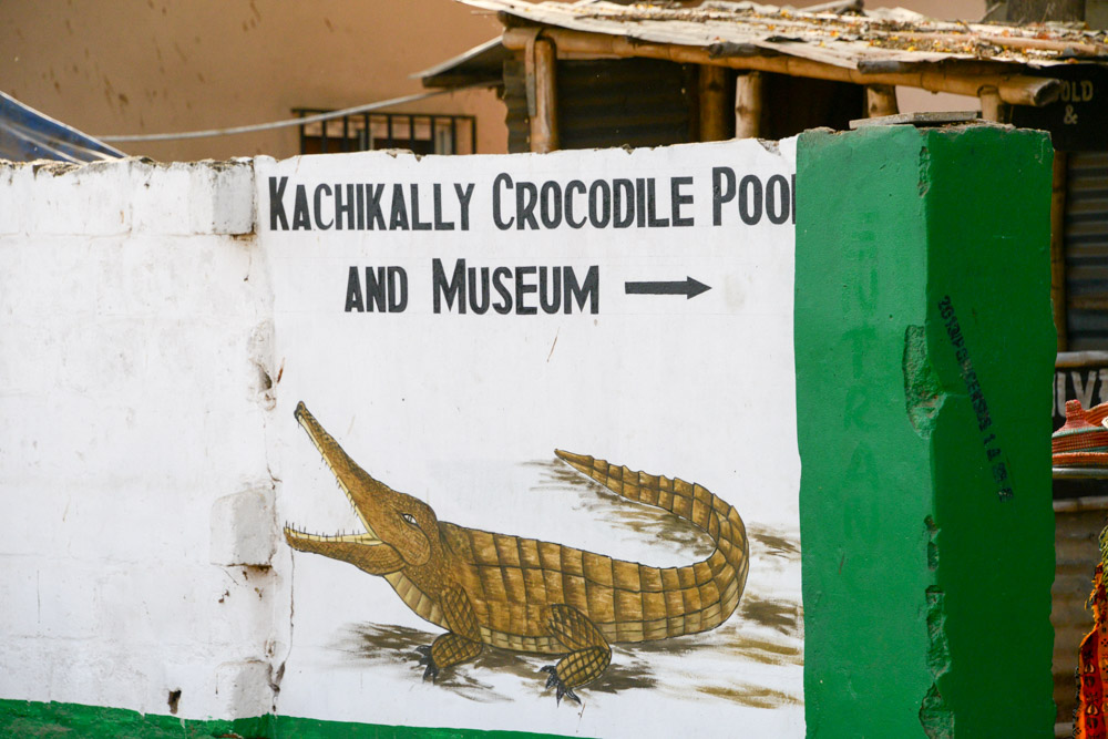 Kachikally Crocodile Pool Gambia
