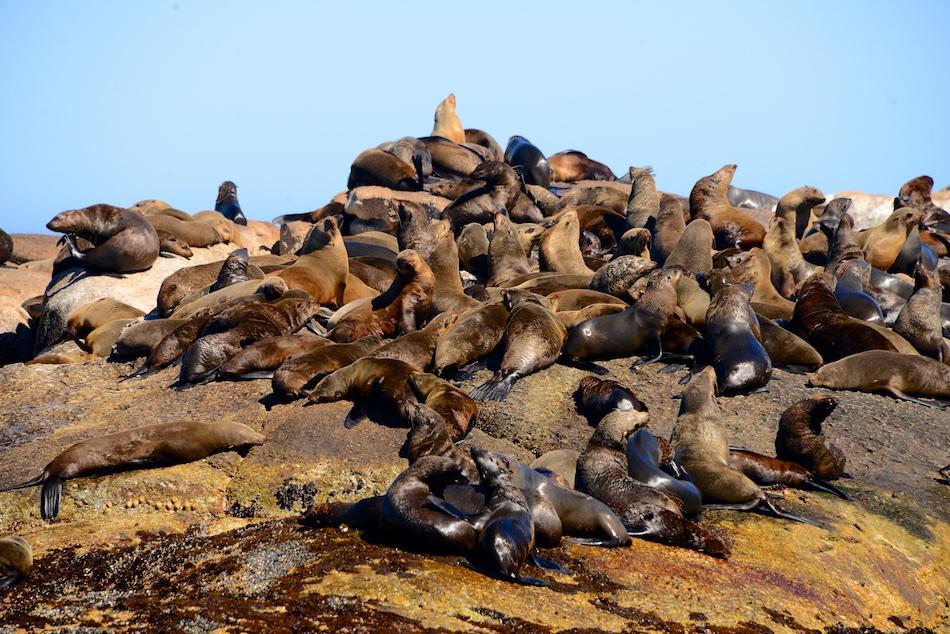 Duiker Island Hout Bay Zuid Afrika