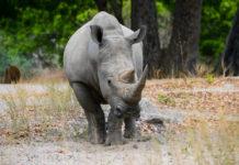 Fathala Wildlife Reserve Senegal