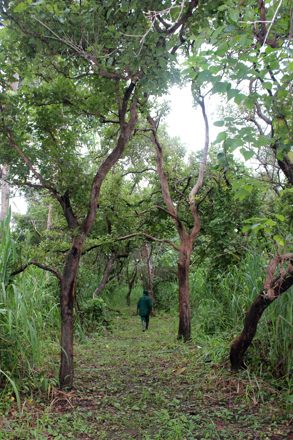 Karangia Trail Outamba-Kilimi Sierra Leone