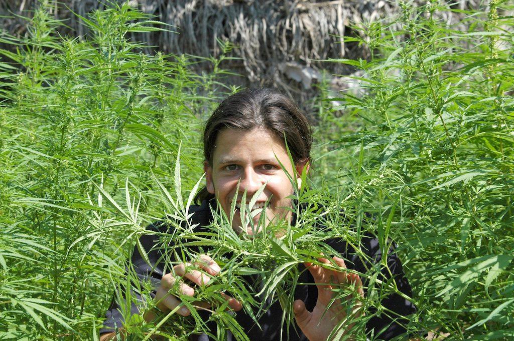 Cannabis marihuana Karone Boune Casamance Senegal