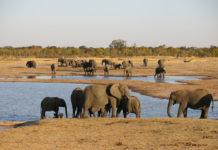 Nationaal Park Hwange Zimbabwe