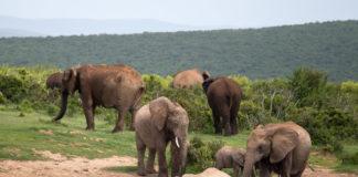Nationaal park Addo Zuid Afrika