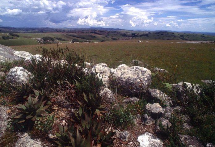 Nyika Plateau Malawi