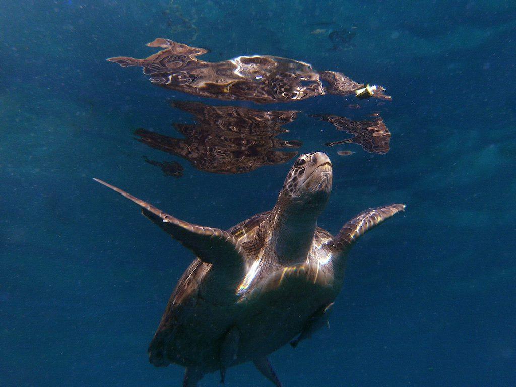Schildpad Tofo Mozambique