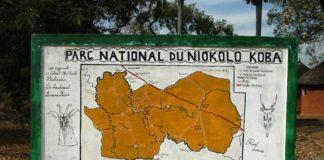 niokolo koba nationaal park Senegal
