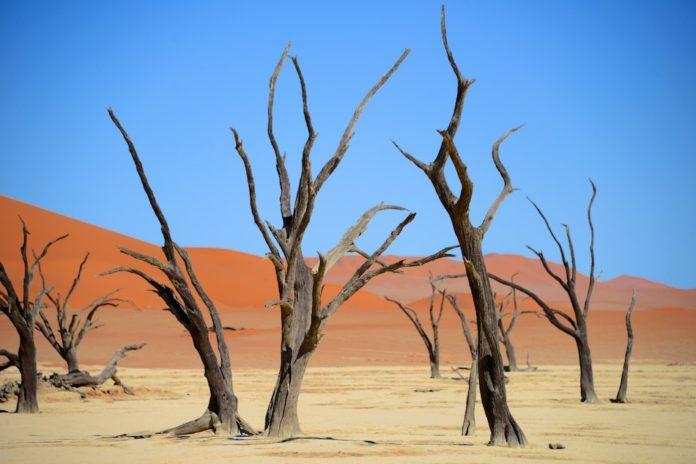 Dodevlei Deadvlei Namibië