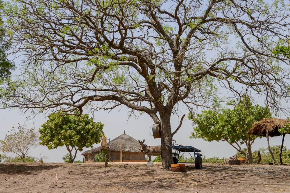 Ezelkar Sipo Sine Saloum Delta Senegal