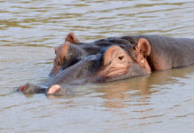 Isimangaliso Wetland Park Zuid Afrika