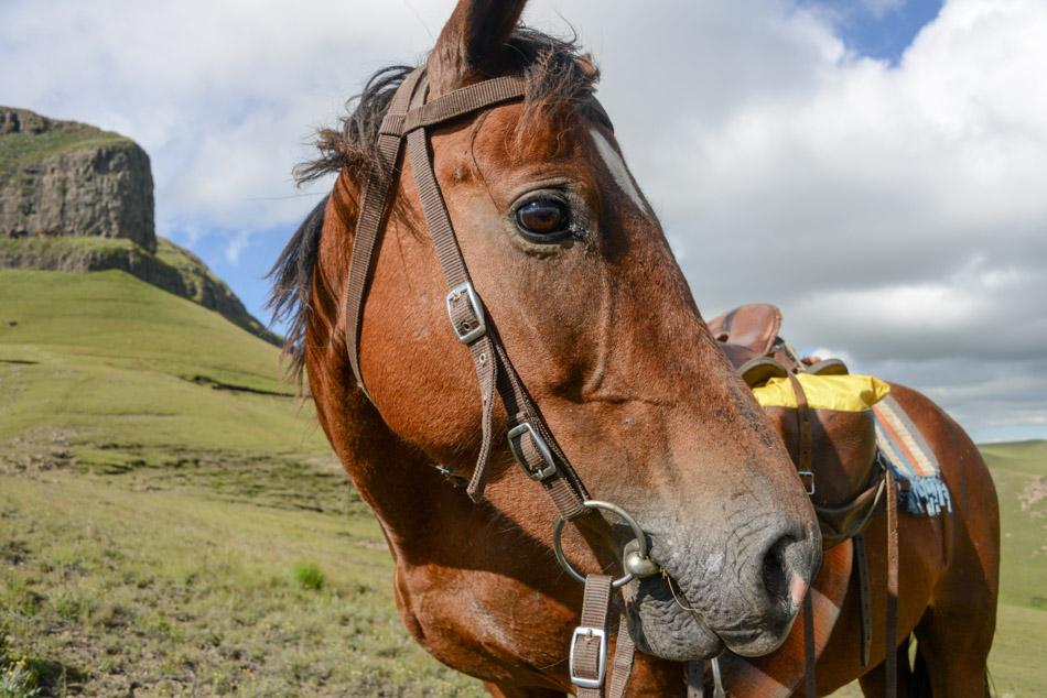 Khotso paardrijden Sehlebathebe Lesotho