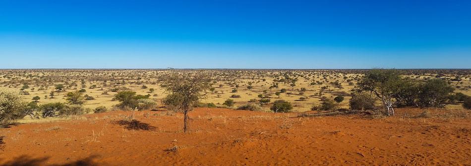 Woestijn Kalahari Botswana