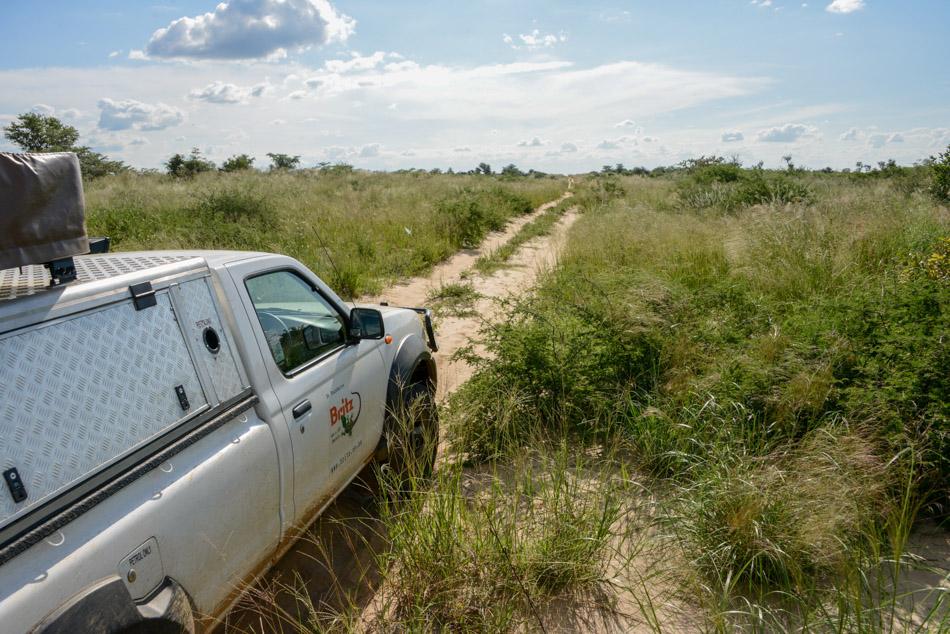 Selfdrive safari Khutse Botswana