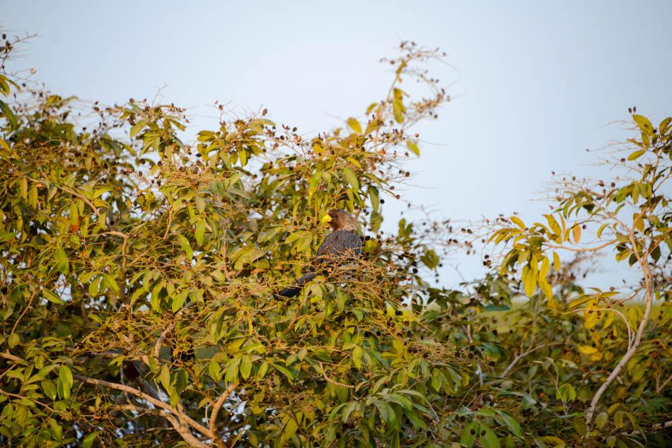 vogels Sine Saloum Delta Senegal