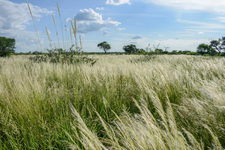 woestijn Khutse Botswana