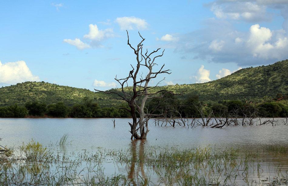Mankwe Stuwmeer Pilanesberg Zuid Afrika