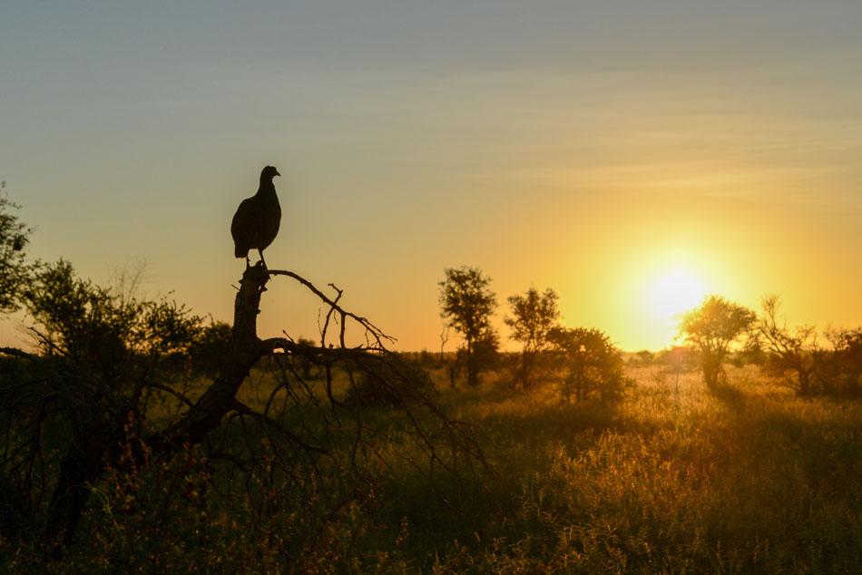 Zonsondergang Hlane Swaziland