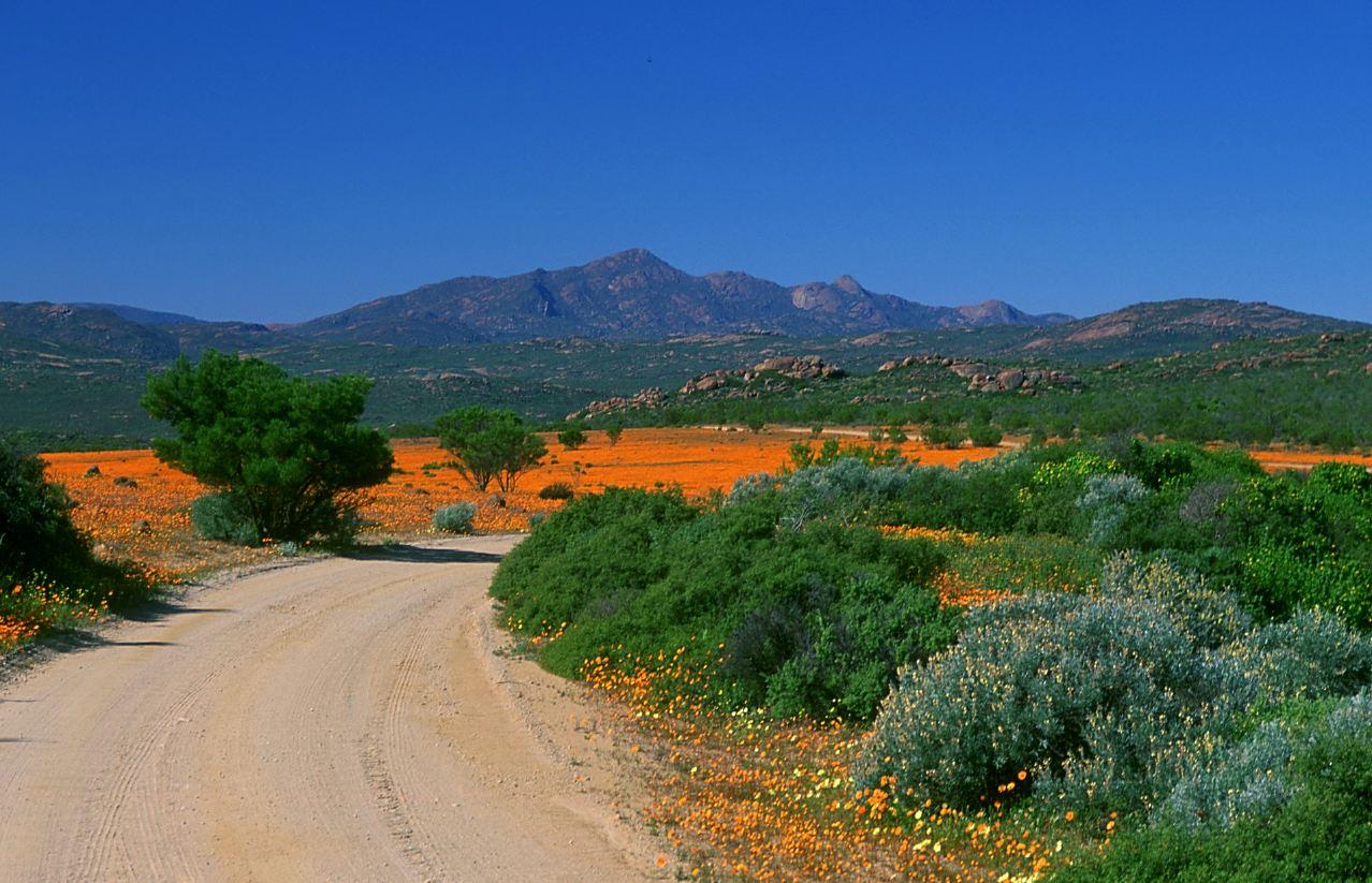 Klipkoppe Namaqualand zuid afrika