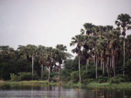 Liwonde national park Malawi