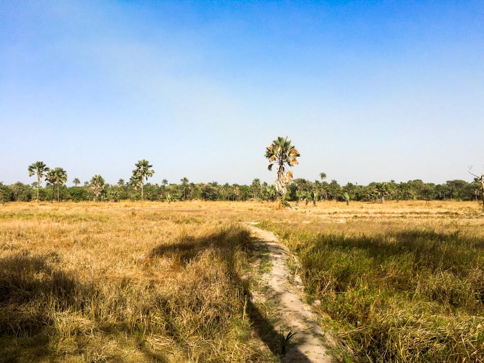rijstveld Niafarang Senegal