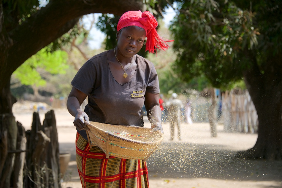 Anna zeeft de rijst in Niafarang Senegal