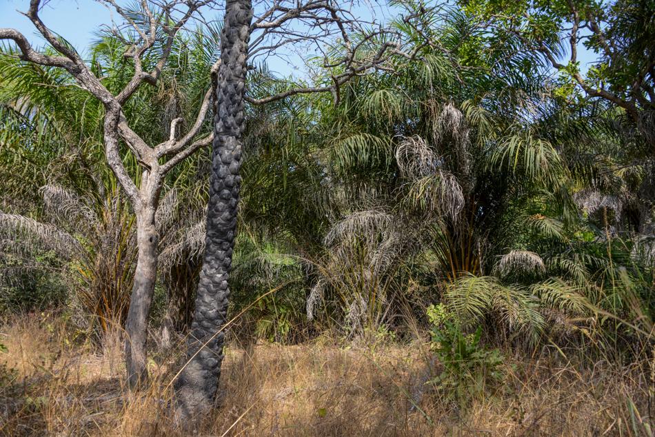 bush Niafarang Casamance Senegal