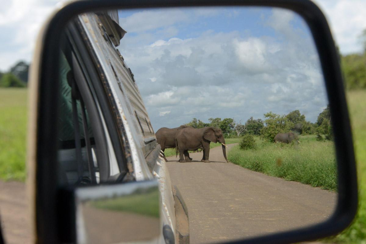 Krugerpark Zuid Afrika oppassen