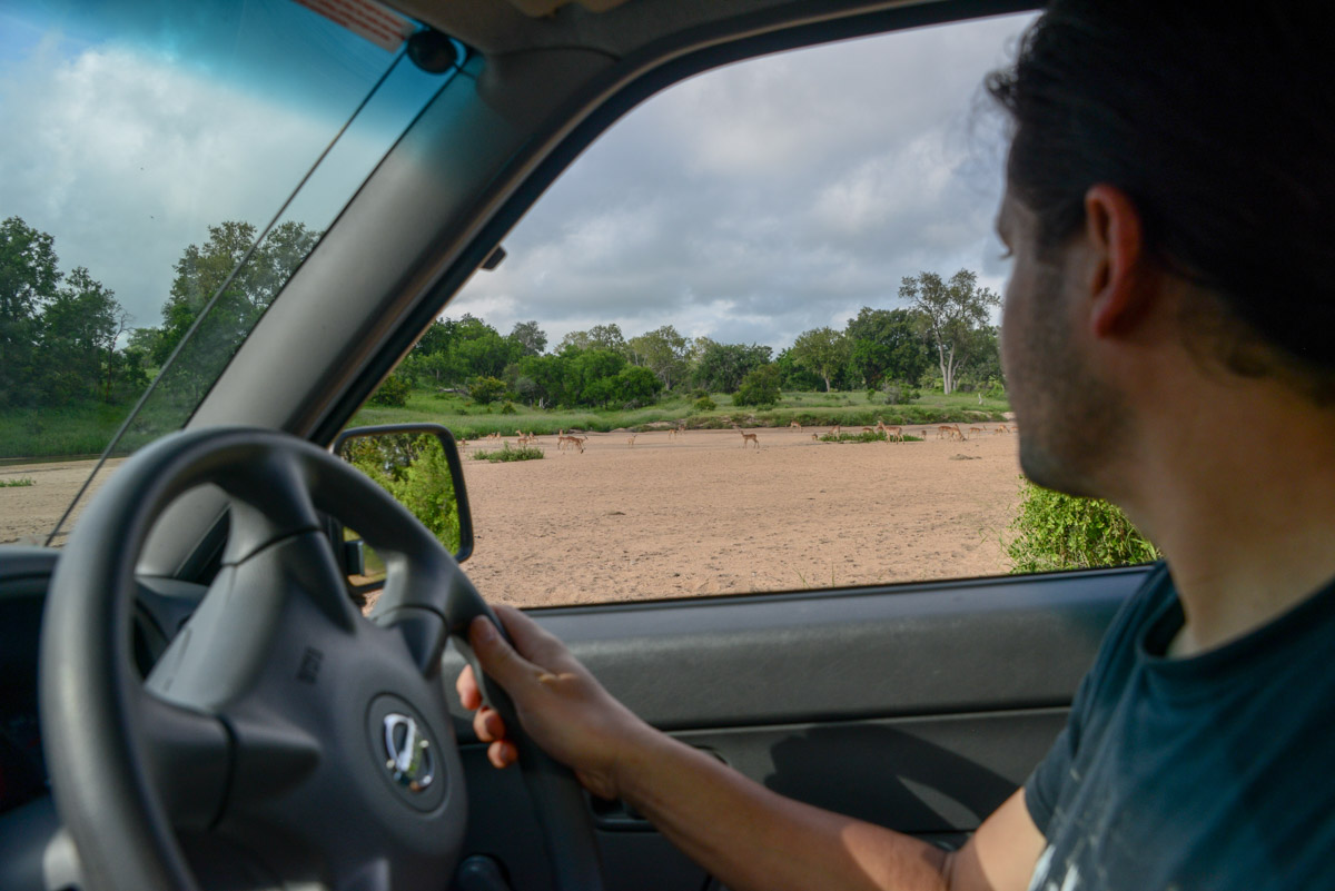 Safari Krugerpark Zuid Afrika