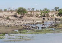 Makgadikgadi Nxai Pan Botswana