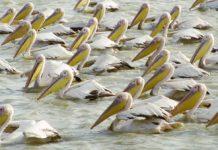 Nationaal park Djoudj