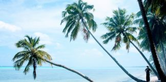 Palmboom strand Harper Liberia