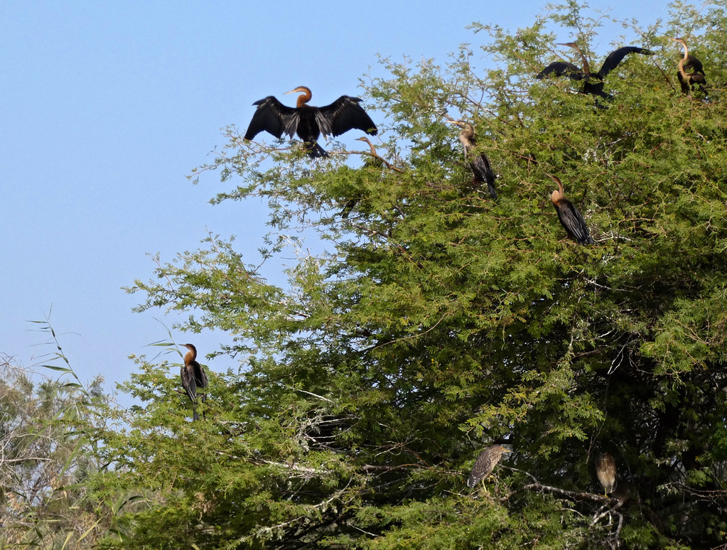 vogels nationaal park Djoud