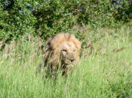 Kafue Zambia