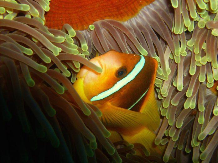 Marsa Nakari Egypte Finding Nemo