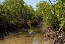 Bao Bolong Wetland reserve Gambia