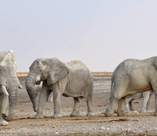 wilde dieren verplaatsen Zimbabwe