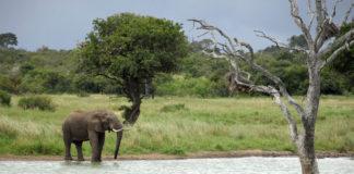 Matusadona Zimbabwe