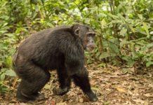 Moyen-Bafing Guinee