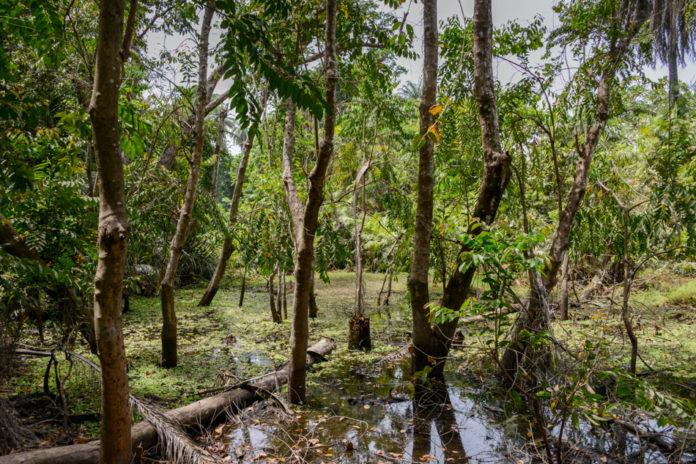 Nationale parken van Gambia