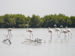 Parque Naturel Cacheu Guinee Bissau