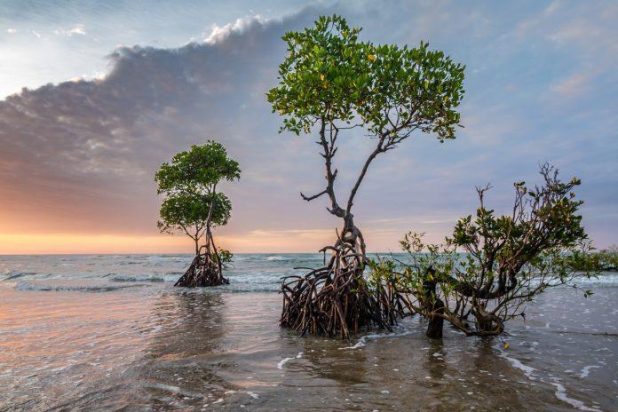 Tanbi Wetland Complex Gambia