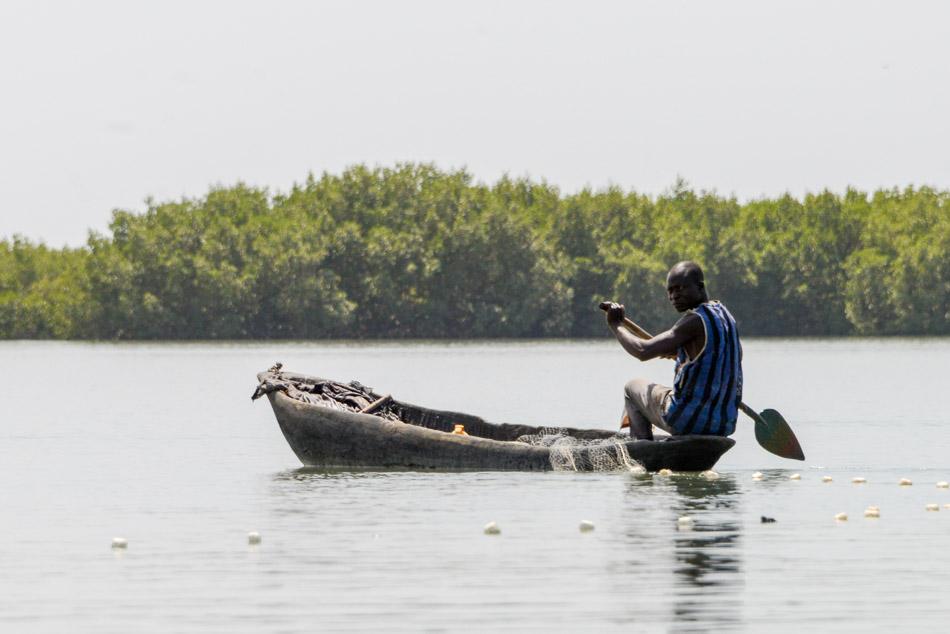 Visser Guinee Bissau Cacheu