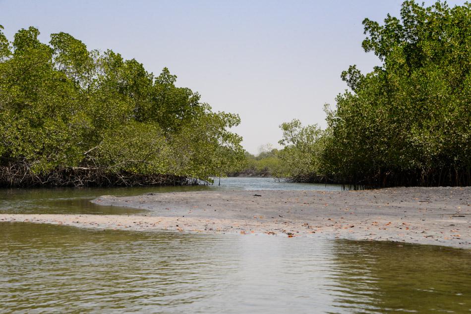 weg door mangrove Guinee Bissau Cacheu