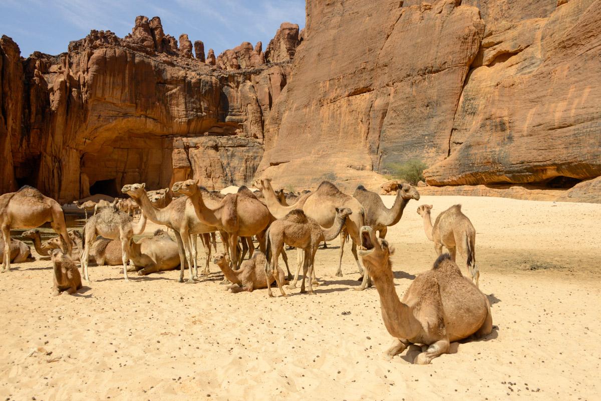 Guelta d'Archei Ennedi kamelen