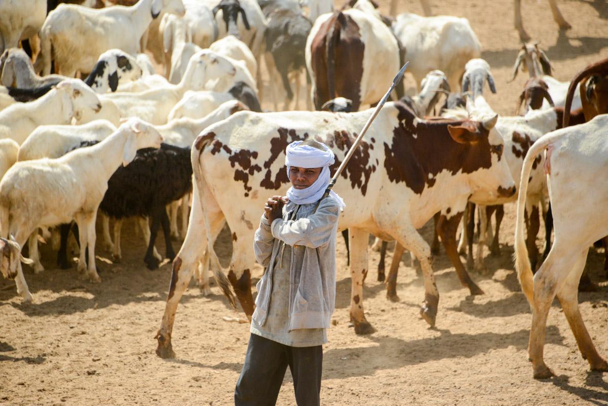 Herder jongen Tsjaad