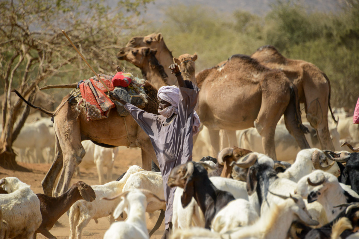 Nomaden Tsjaad hoeden